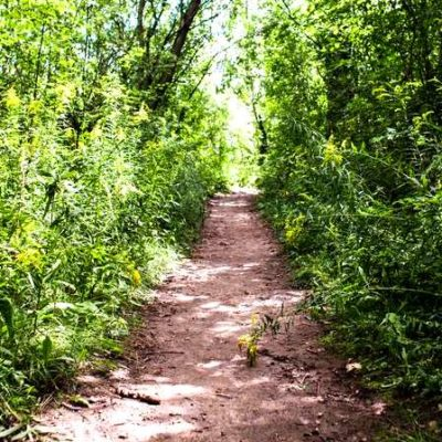 tress with path